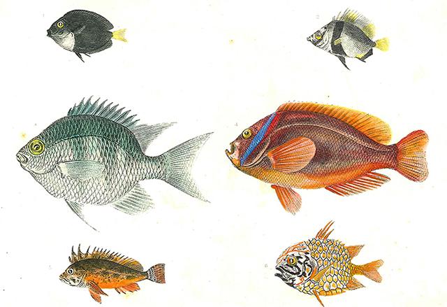 第2巻に掲載されている色鮮やかな魚たちのスケッチ
